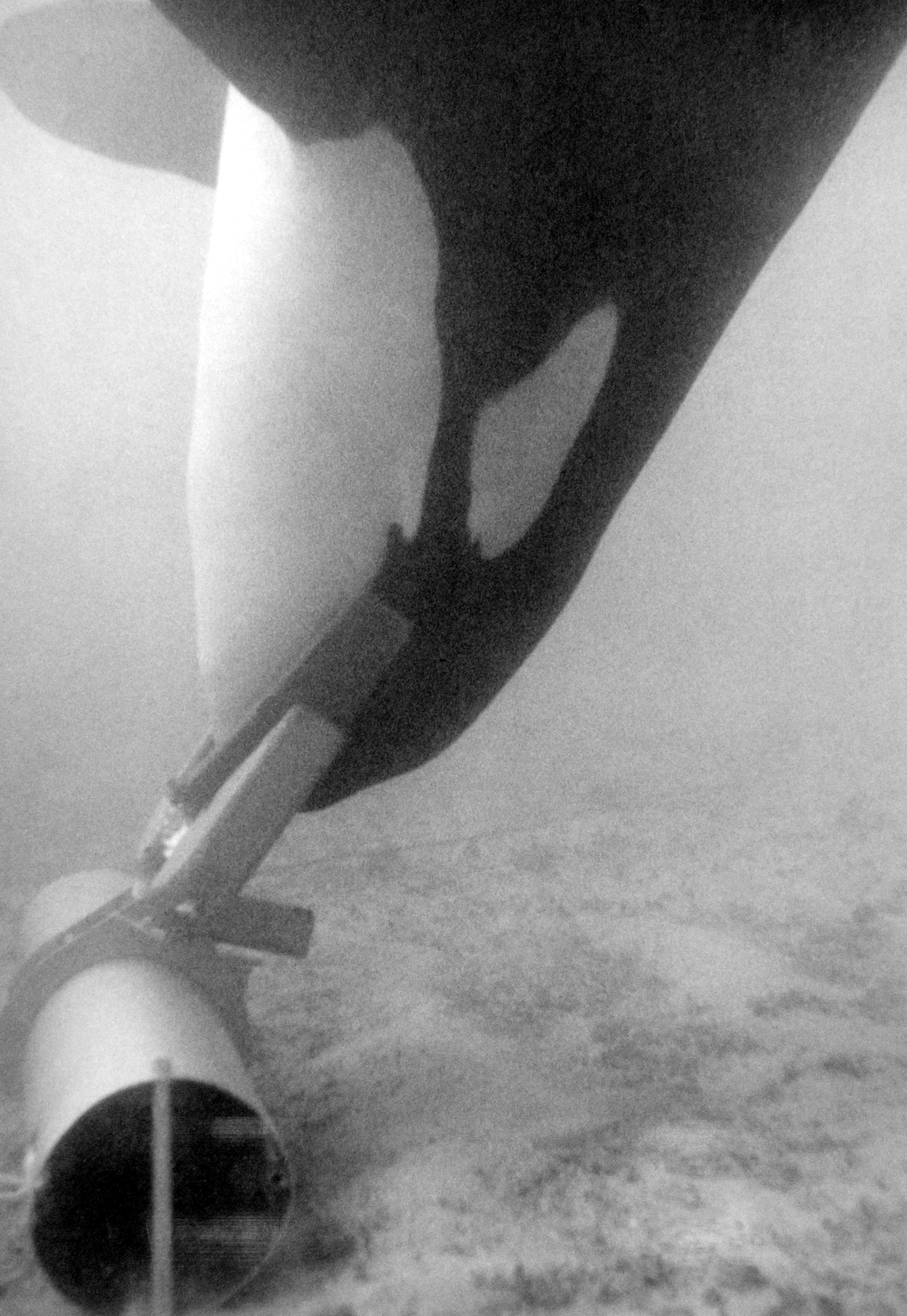Ahab, a 5,500-pound killer whale, recovers a piece of inert ordnance using an acoustic pinger to guide him during the Deep Ops project. The whale is also equipped with a grabber device and a hydrazine system to allow the object to float easily to the surface.