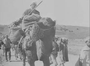 A man transports films on a camel.