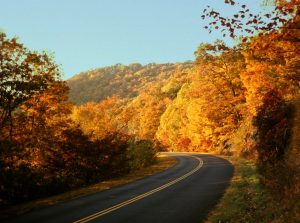 Fall Trees on the Blue Ridge Parkway