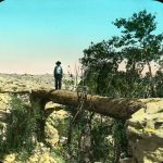 A man standing on a natural log bridge in the First Forest, at the Petrified Forest National Monument