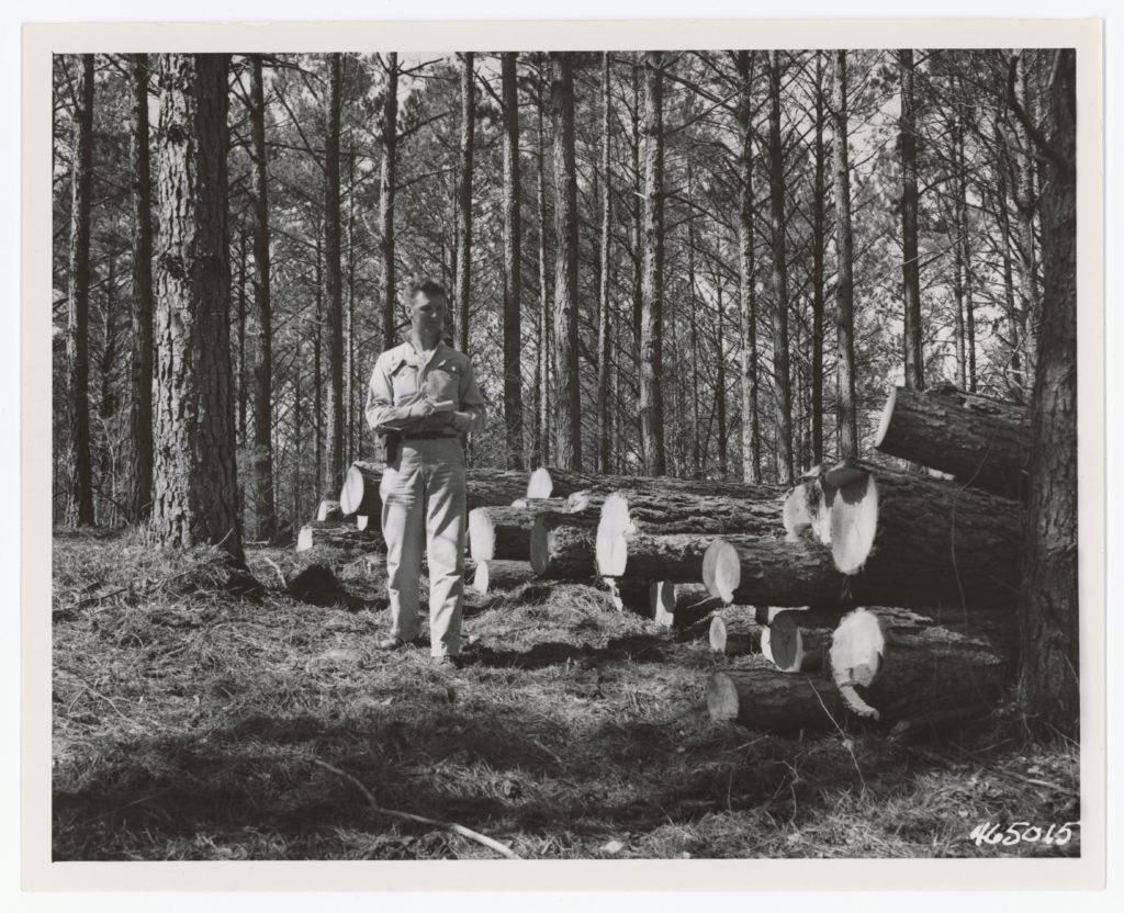 Foresters at Work